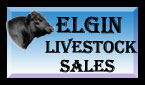 Elgin Livestock Sales